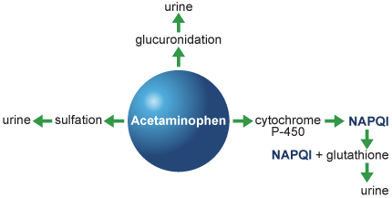 Acetaminophen Metabolism Chart